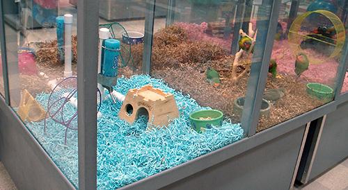 save-money-as-a-pet-store-fibercore-eco-bedding